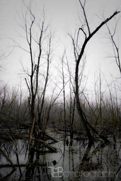 Indiana Swamp