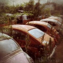 Volkswagen Bone Yard
